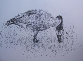 Sketch of a goose
