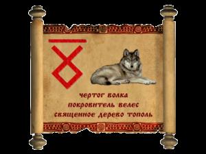 волк-300x225