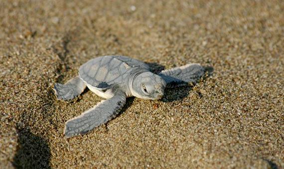 20040825-mini_turtle