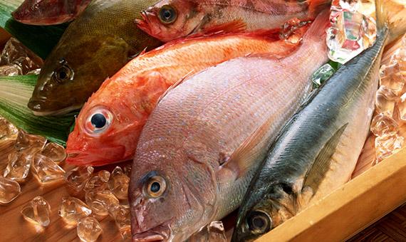 морская-рыба