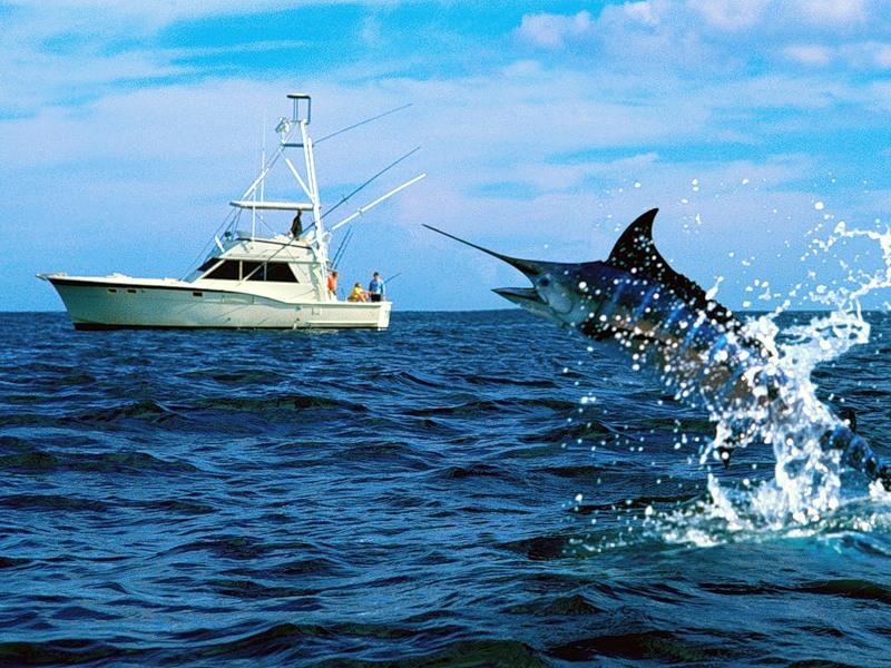 как ловят рыбу баржи