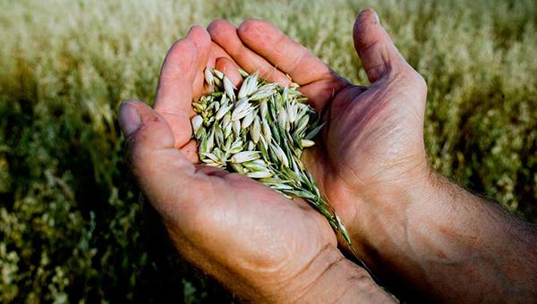 kiprskie-fermery-poluchat-dolgozhdannye-kompensacii