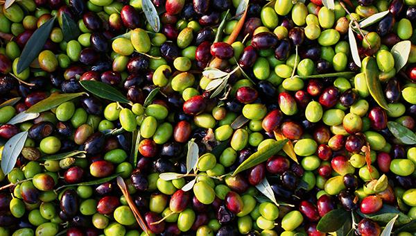 sanitarnaya-sluzhba-kipra-obnaruzhila-pesticidy-v-egipetskih-olivkah