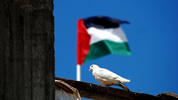 novyy-proekt-rezolyucii-po-palestine-vnesen-v-sb-oon