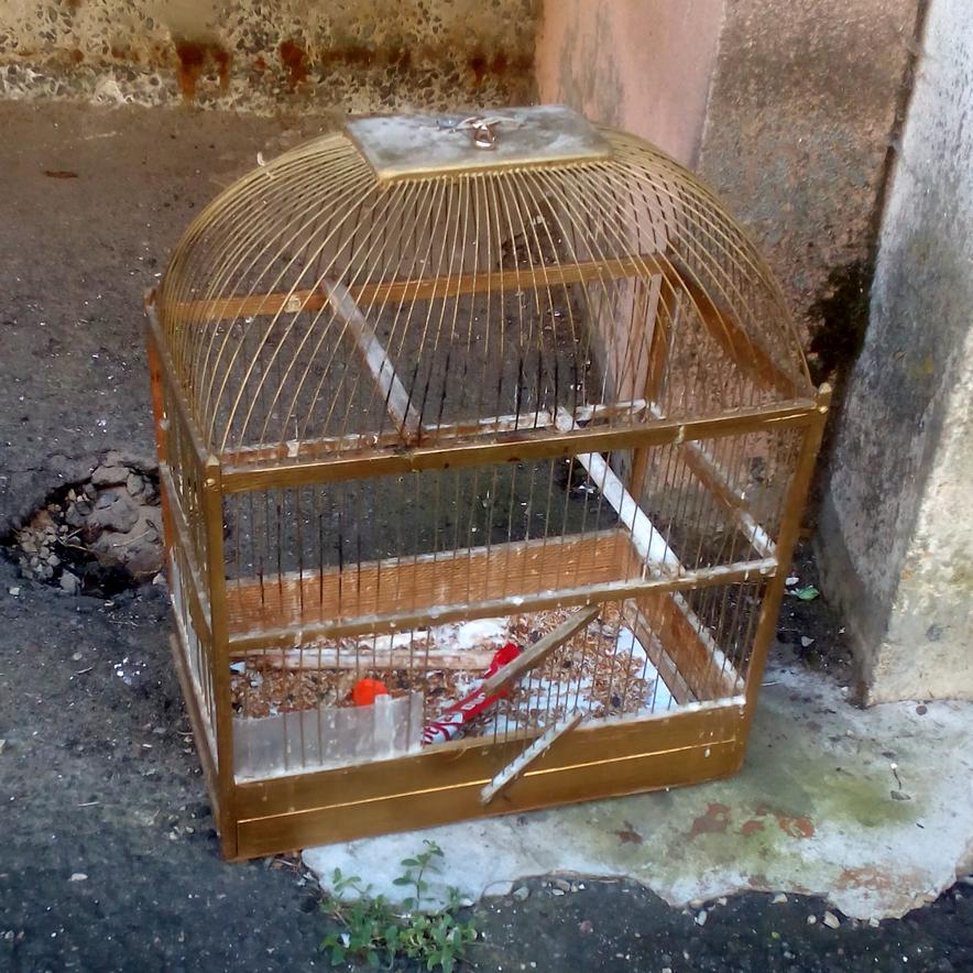 птичка в клетке.png