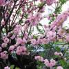 Пражская весна