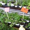 Пряности для тех, кто хочет их выращивать дома
