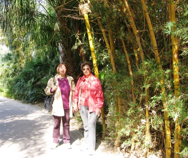 В бамбуковой роще
