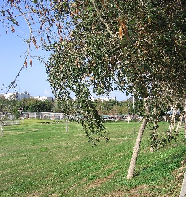 Лужайка для фейрверков