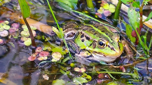 еще жаба