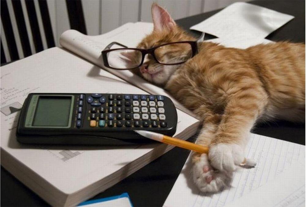 Кот в офисе картинки