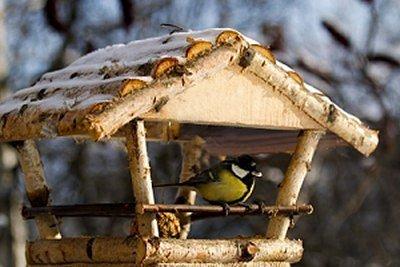 bird-on-fly-thru-feeder