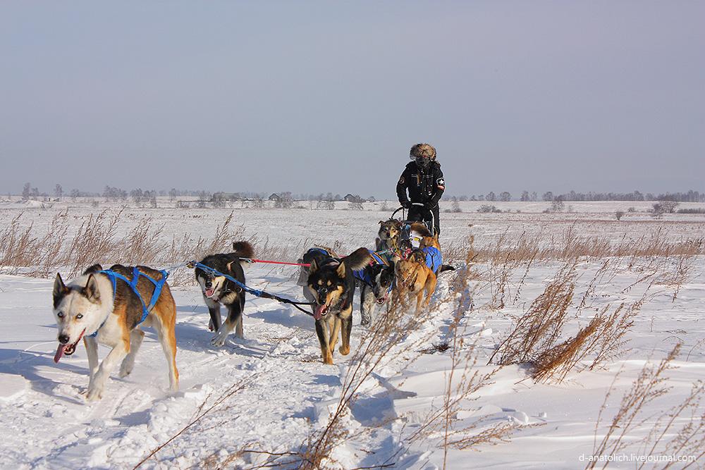 Через Байкал на собачьей упряжке