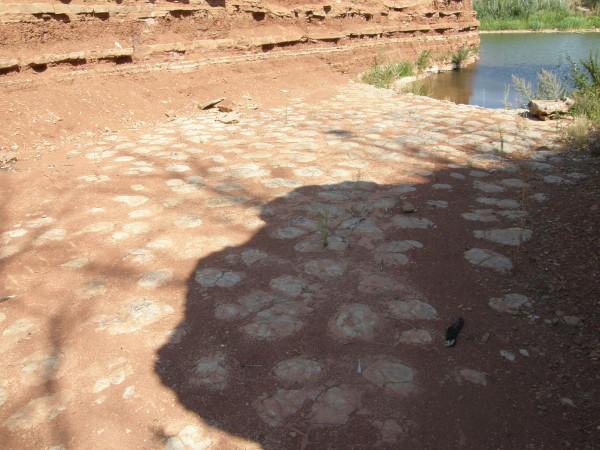 Строматолиты - общий вид