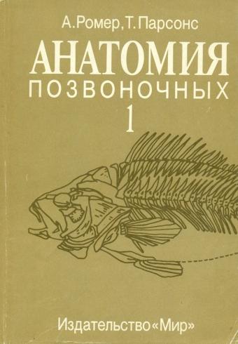 Анатомия позвоночных (1)