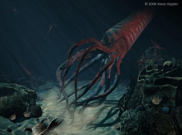 Картинки по запросу Ортокон, гигантский ортокон