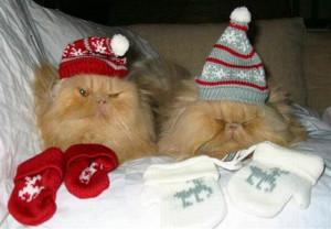 коты на рождество