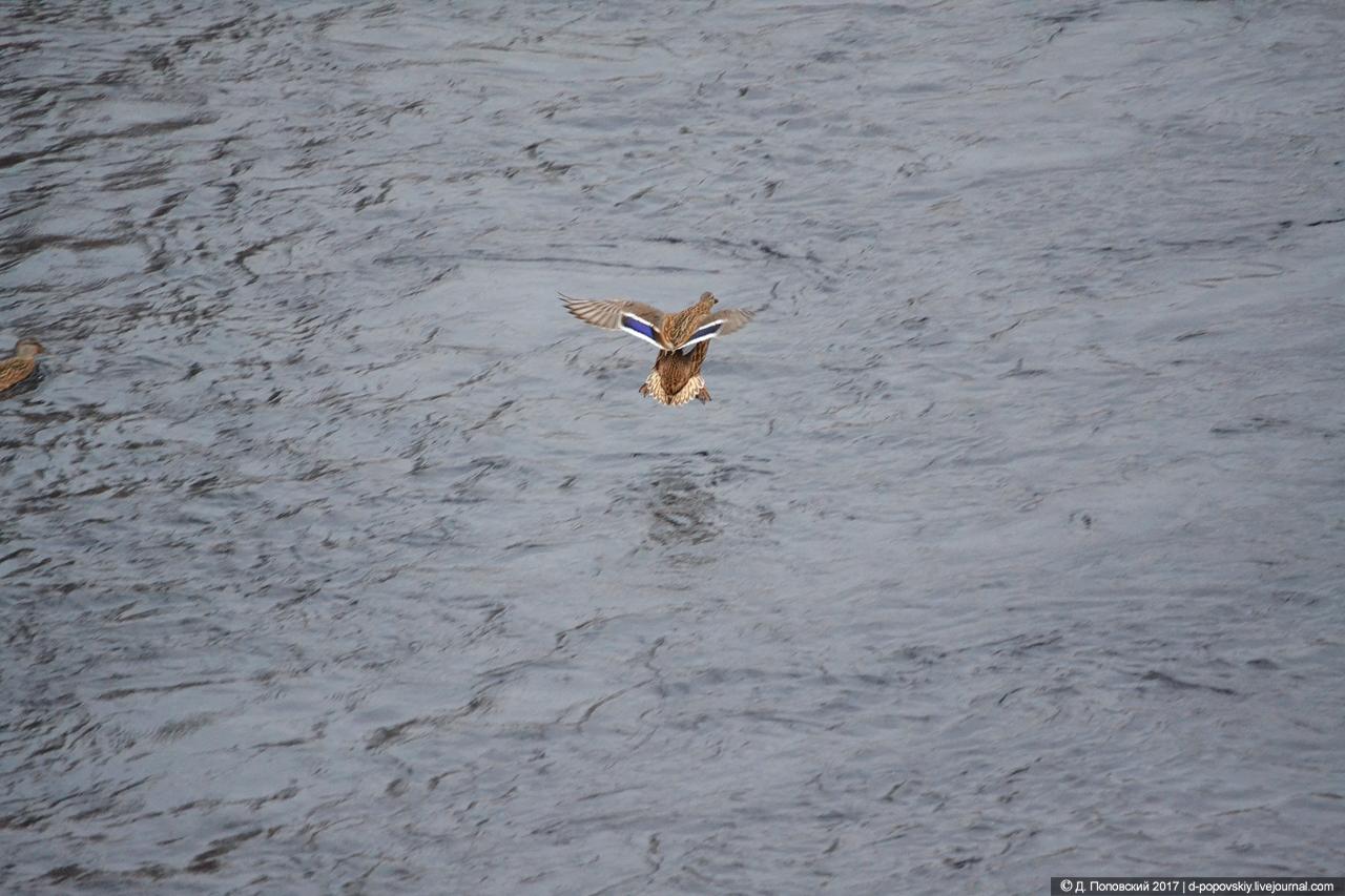 Утки в речке Аба
