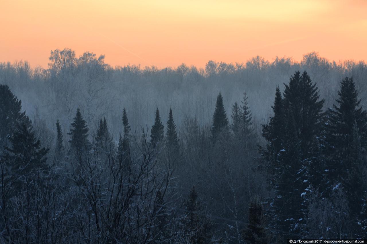 Томские леса