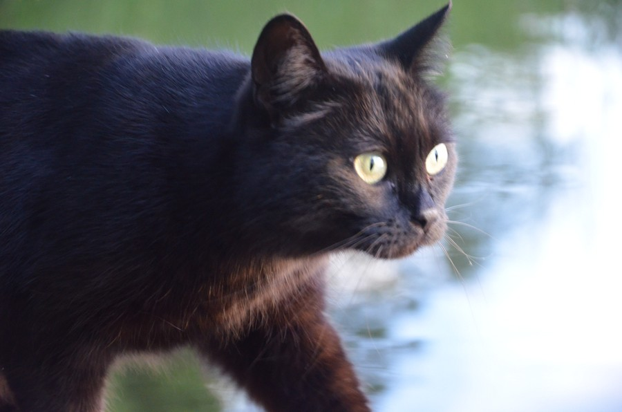 кошка дуся фото