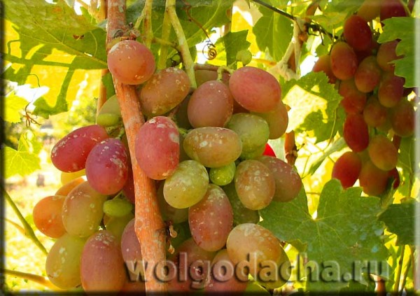 winograd