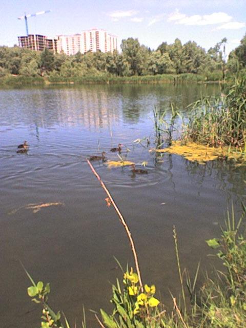 Троещина Озеро (2)