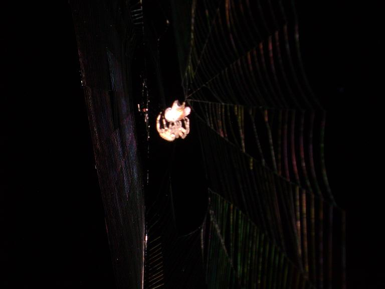 Another shot of said spider going to town on the bug