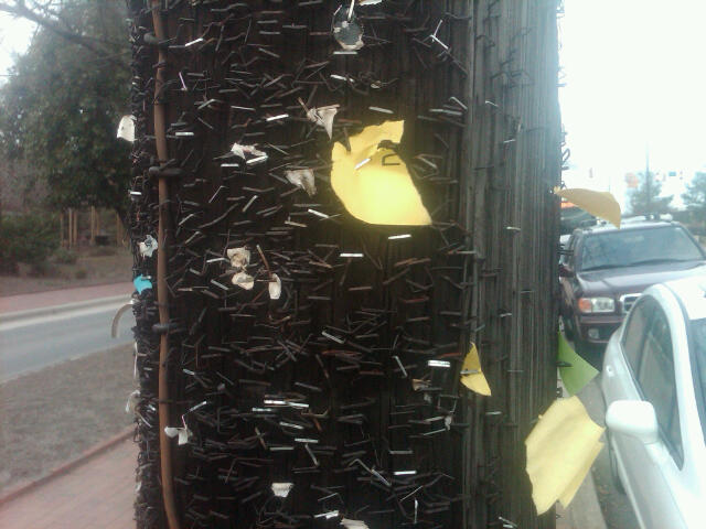 A shitload of staples in a light pole