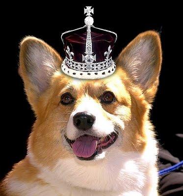 Corgi with a crown on its head
