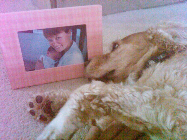 Nala lying on the floor looking longingly at a picture of Jen