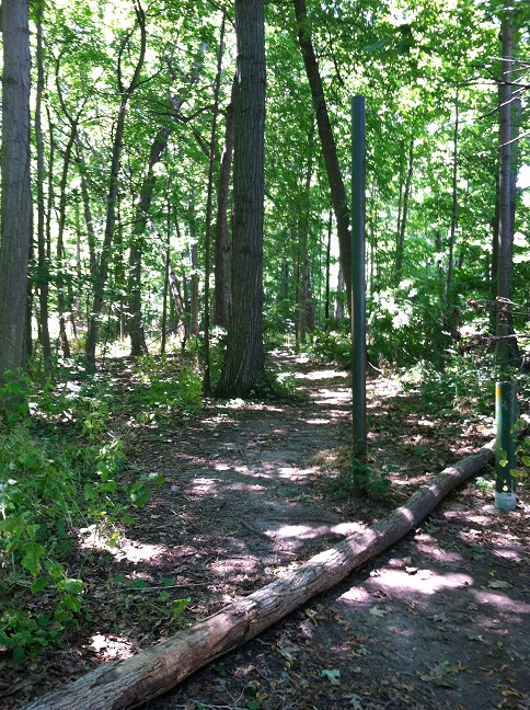 A path in the woods with a fallen tree across one section of it.