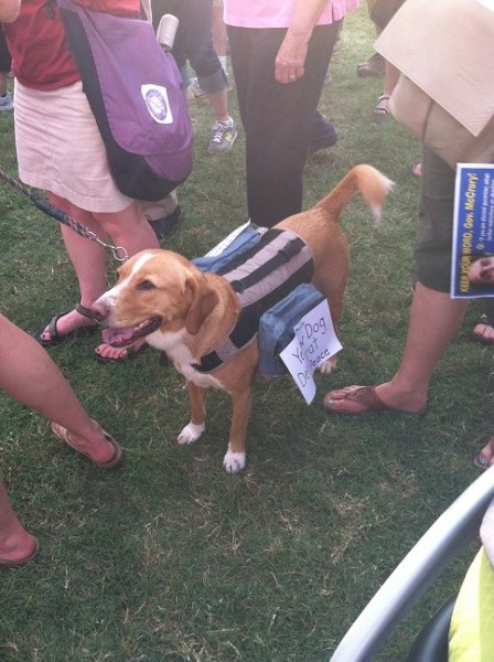 Dog standing with a sign on him that says: Yellow Dog Democrat