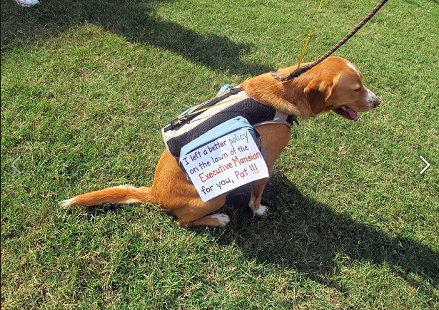 Dog sitting with a sign on him that says: I left a better policy on the lawn of the Executive Mansion for you, Pat.