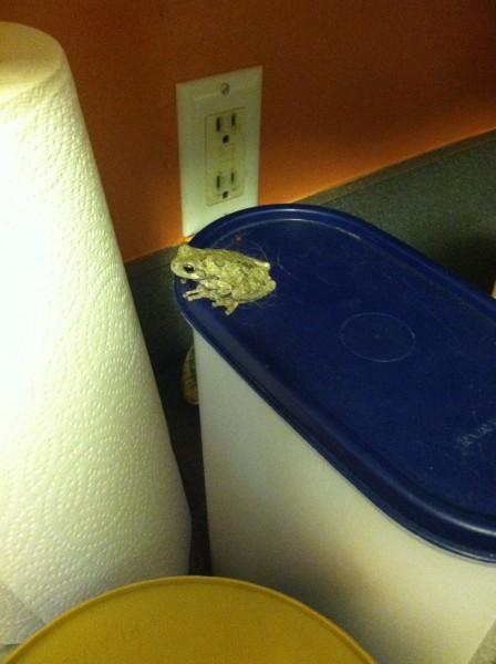Indoor frog