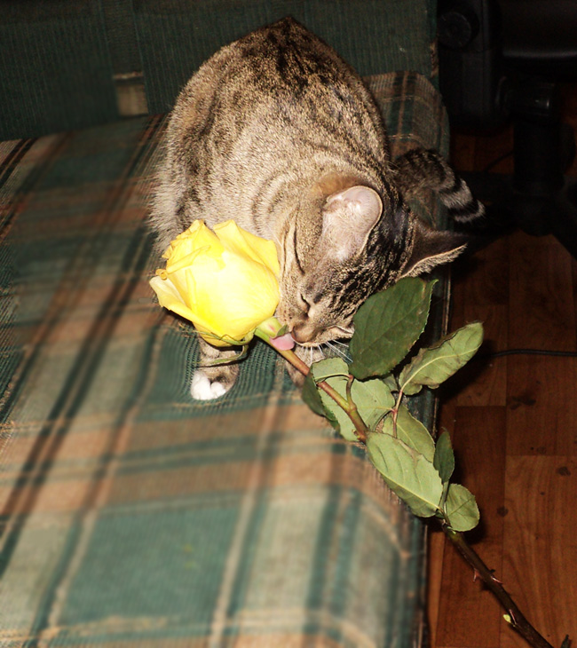 Бася лижет розу