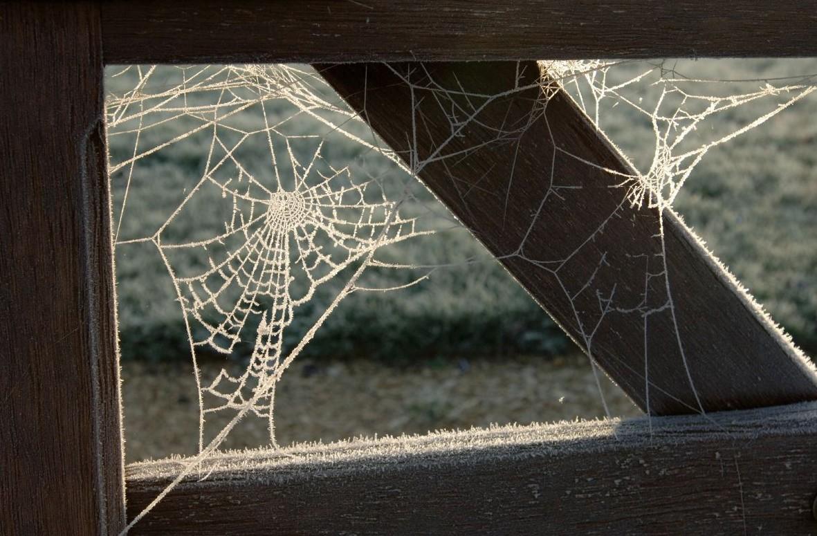 Mick Yates - spider's web