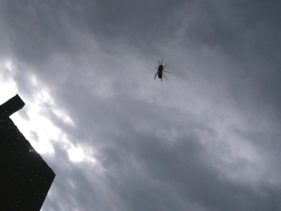last wasp