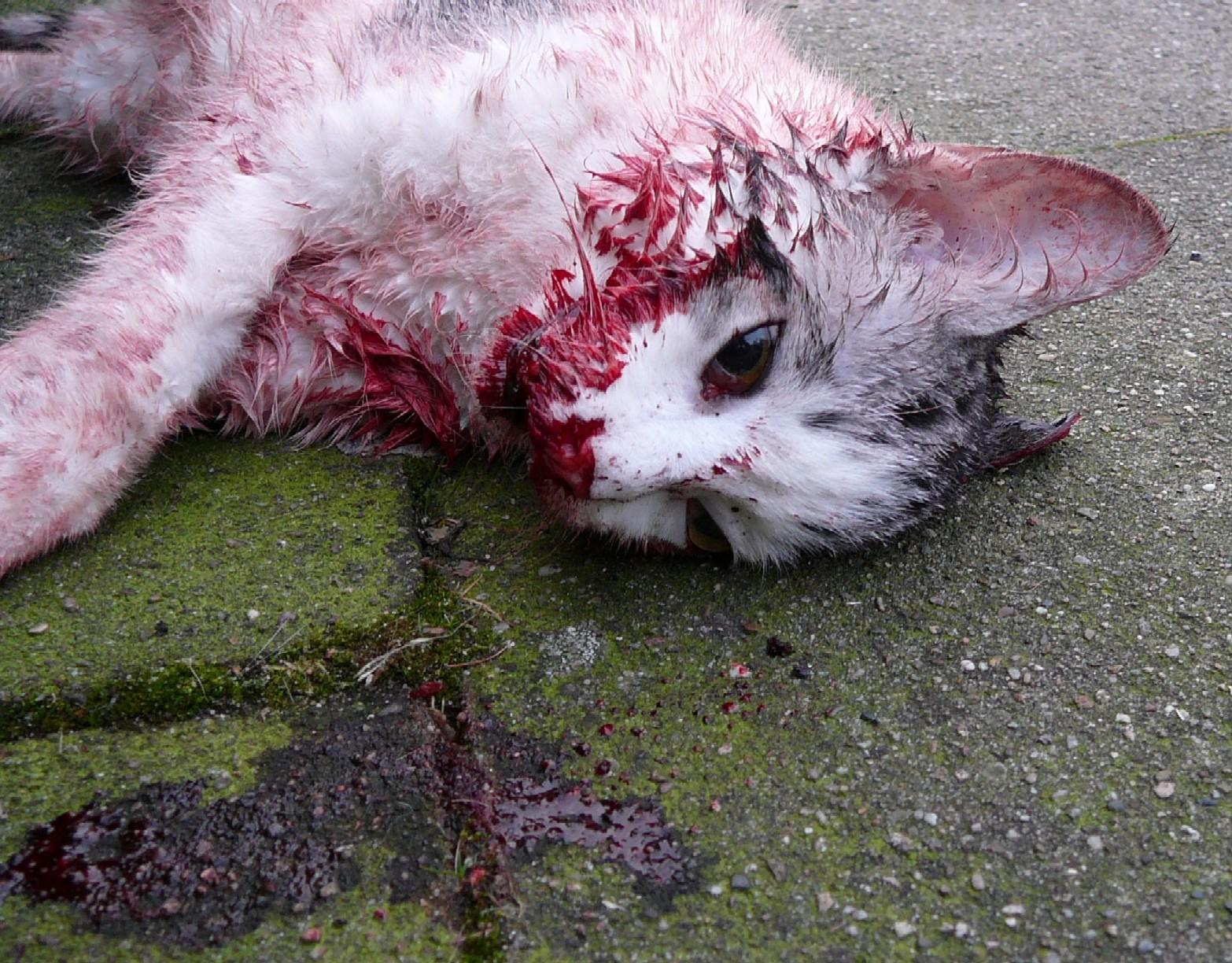 dead cat 27-12-2013