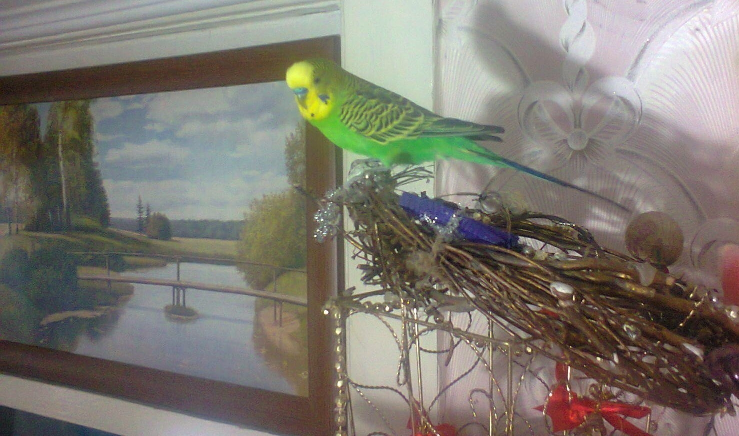 Попугай Кеша на воле