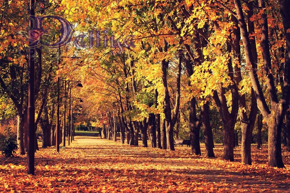 Осенняя аллея в парке Горького_с контакта