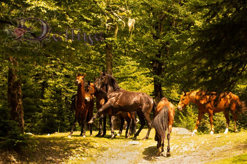 Лошади_2_низкое качество для фотосайтов