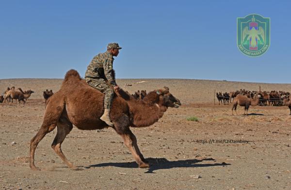 Верблюжий полуэскадрон погранотряда № 0166 Главного управления Пограничной охраны Монголии
