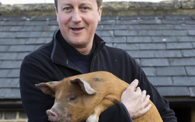 Секс с свинеой