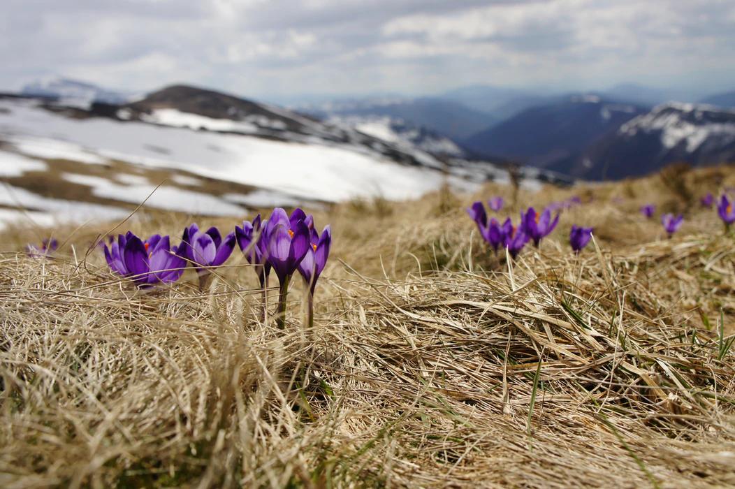 Это блогеры просыпаются весной с новыми красочными идеями =)