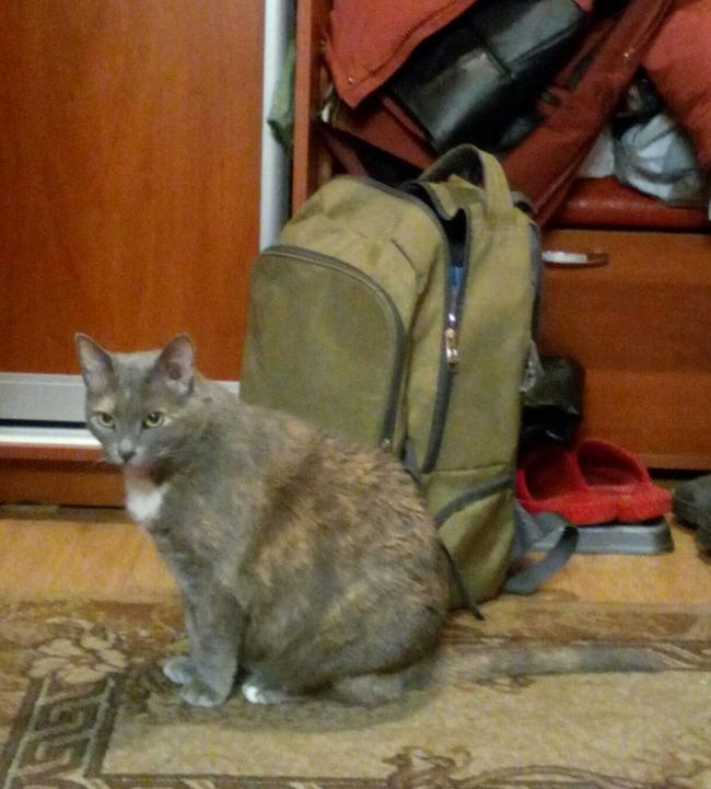 авокадная_кошка