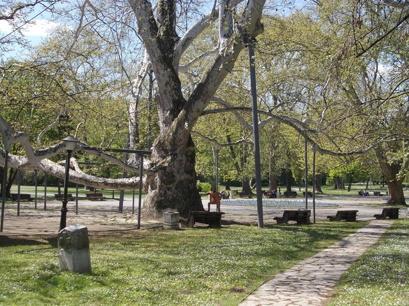 beograd-tree