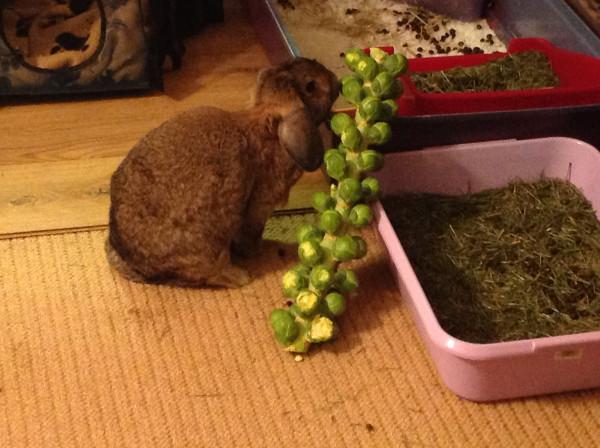 annie sprout
