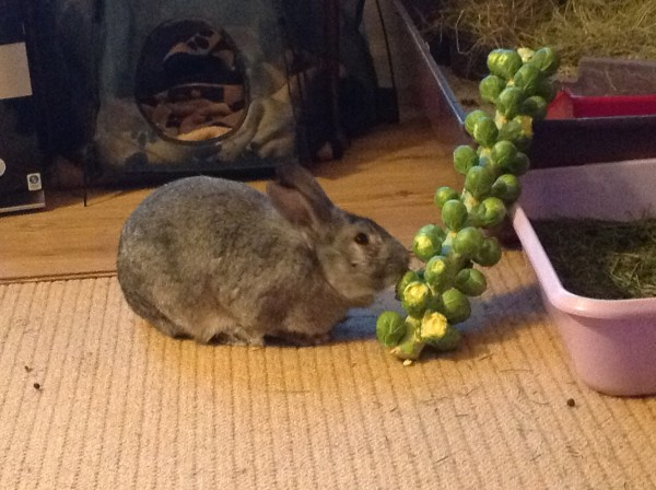smokey sprout 1