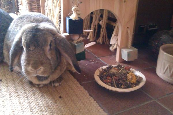 bunny Camp Present 5