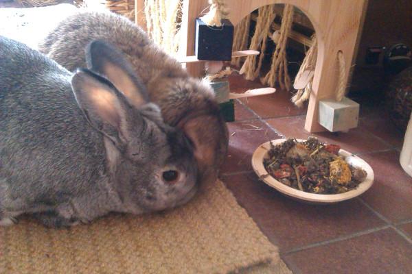 bunny Camp Present 3